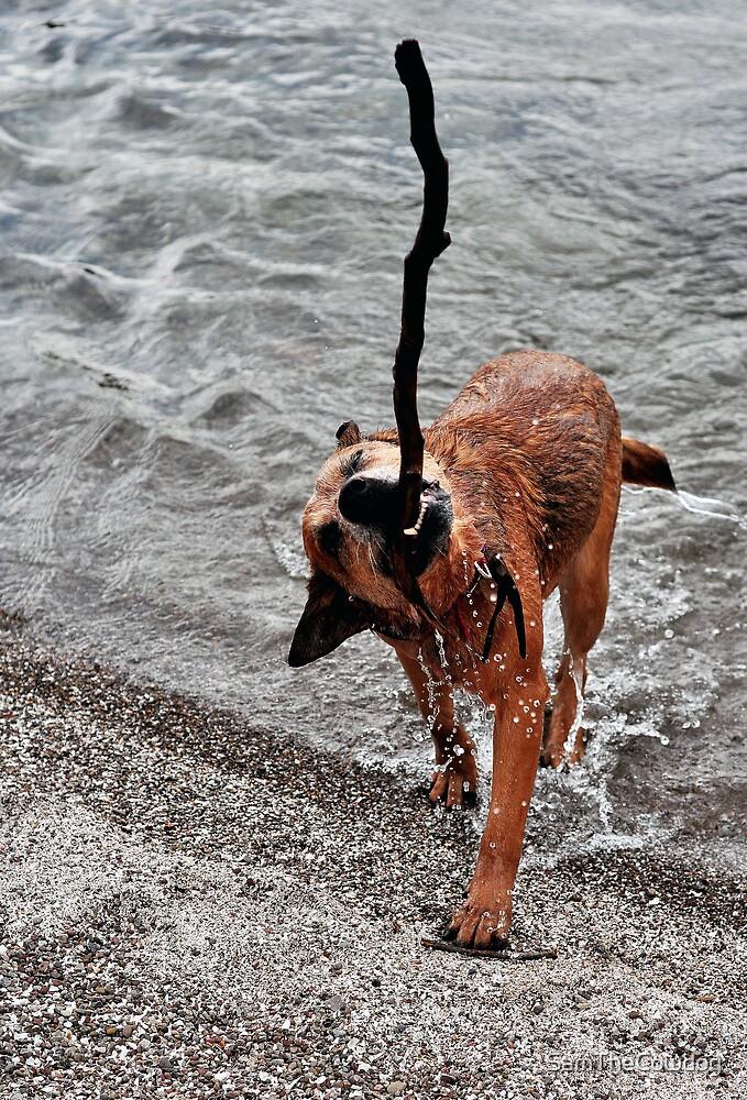 Sun, Swim, Stick by SamTheCowdog