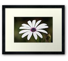White flower 2796 Framed Print