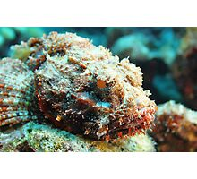 Scorpion Fish Photographic Print