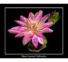 "Pink Waterlily - ""Enameled"" Special Effect Photographic Print"