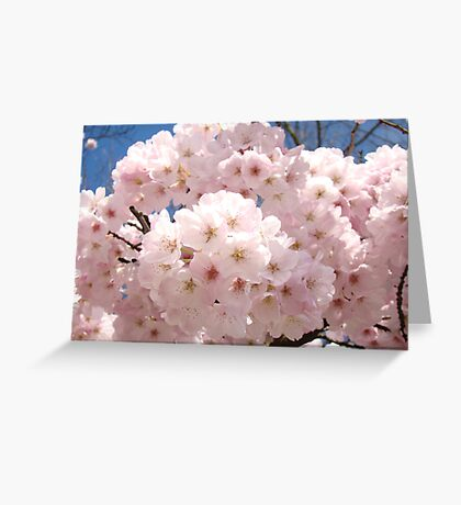 Bright Pastel Pink Spring Tree Blossom Flowers Baslee Greeting Card
