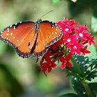 Butterfly album, butterfly Nr. 2 by loiteke
