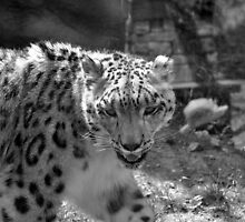 Smiling Snow Leopard by April May Maple