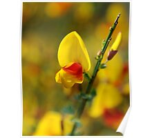 Yellow and Red flowers Poster
