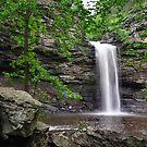 Cedar Falls, Petit Jean Mountain Arkansas by Chris Ferrell