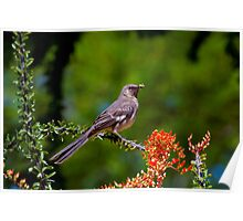 Northern Mockingbrid Poster