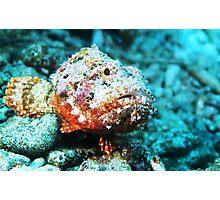 Scorpion Fish Sitting Pretty Photographic Print