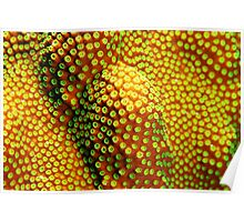 Coral Patterns Poster