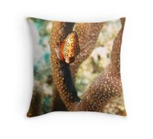 Flamingo Tongue Mollusk Throw Pillow