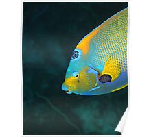 Queen Angel Fish Poster