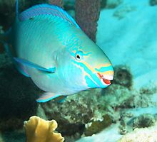 Parrotfish Smiling by Rich Synowiec