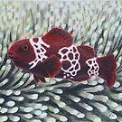 Maroon Lightning Clownfish by Heather Ward