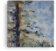 Fir Tree Sky  Canvas Print