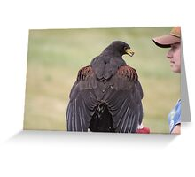 Flight Demonstration - Harris Hawk Greeting Card