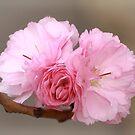 Bowtie Blossoms by David Kocherhans