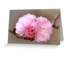 Bowtie Blossoms Greeting Card