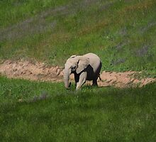 Elephant on the move. by LordMortis