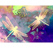 Painting Orchids & Dragonflies. Photographic Print