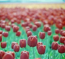 Tulips on the Horizon by Debja
