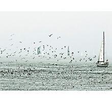 san francisco birds Photographic Print