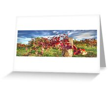 Vines of Shiraz Panorama Greeting Card