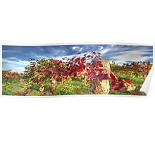 Vines of Shiraz Panorama Poster