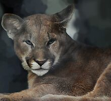 Joseph Watches Closely - Cincinnati Zoo by Kathy Newton