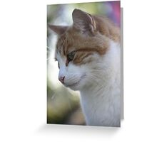 The ginger cat Greeting Card