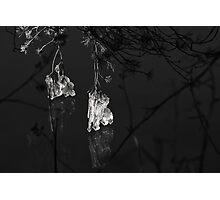 Ice Bells Photographic Print