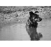 Dog in the Dam Photographic Print