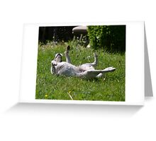 Roll over Greeting Card