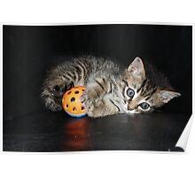 a playful kitten Poster