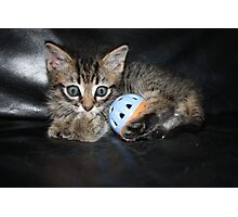 little kitten playing Photographic Print