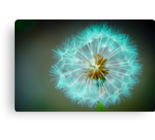 Blue Dandelion Canvas Print