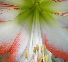 The Inside of a Flower by JessicaJade
