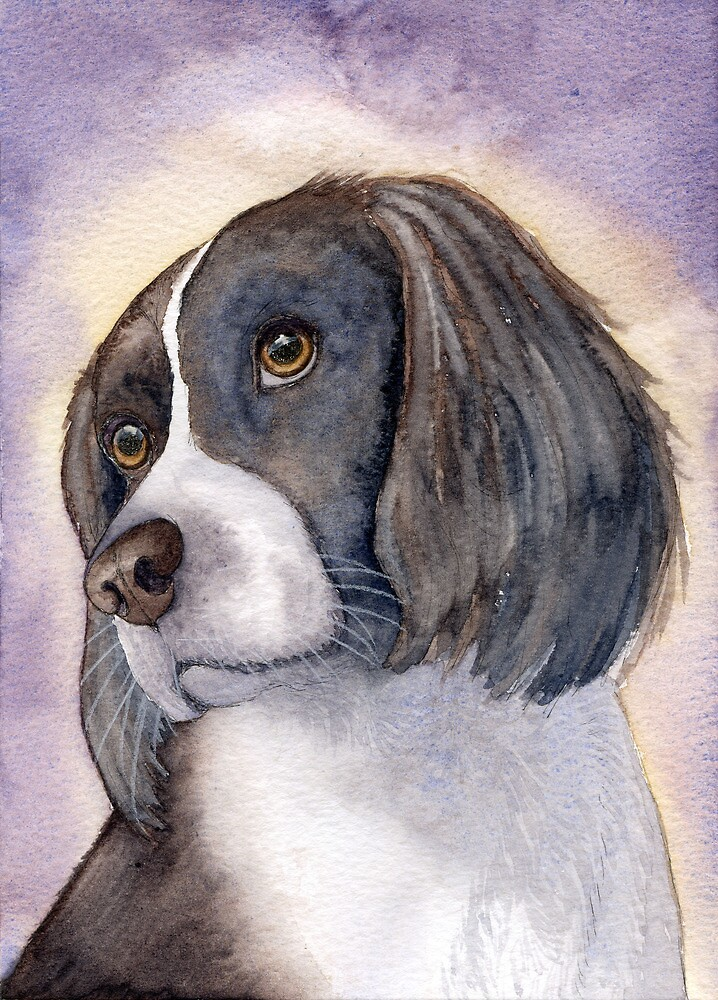 Springer Spaniel - puzzled... by SusanAlisonArt