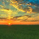Good old sun by Bogdan Ciocsan