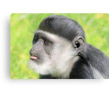 Capuchin monkey  Canvas Print
