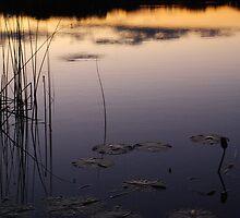 Dusky Kimberley by Graham Mewburn