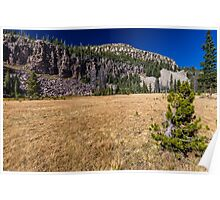 Small pine tree in a meadow Poster