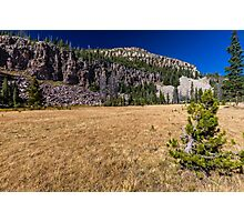 Small pine tree in a meadow Photographic Print