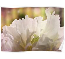 Bridal Peony Poster