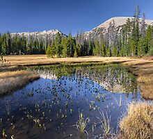 Pond with Mountain reflection by Alan Mitchell