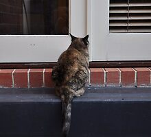 Can somebody let me in ? by Karen E Camilleri