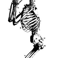 Praying Skeleton - Dem Bones by Jovan Djordjevic