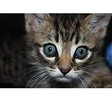 playful kitten in an arm chair Photographic Print