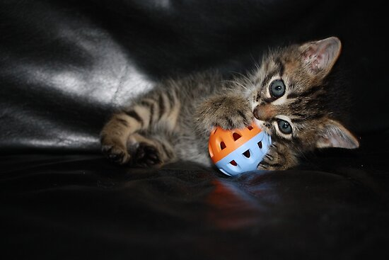 kitten playing ball by Tammy Kuiler