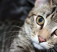 bigger the kitten by Tammy Kuiler