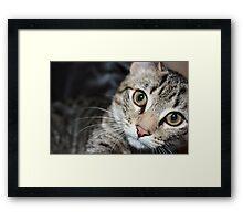 bigger the kitten Framed Print