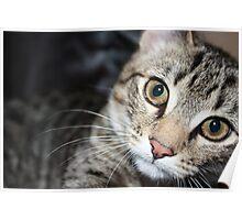 bigger the kitten Poster